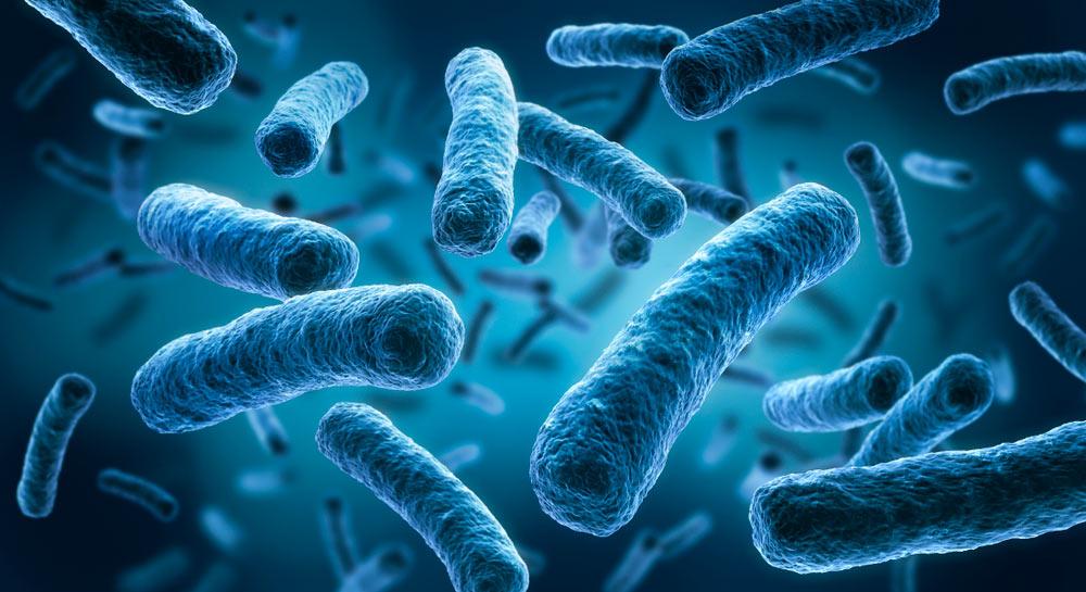 Legionella FDS